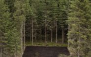 Forest_Square_II_(C)_Antti_Laitinen (1)