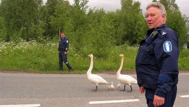 Polizia_Finlandia_cigno